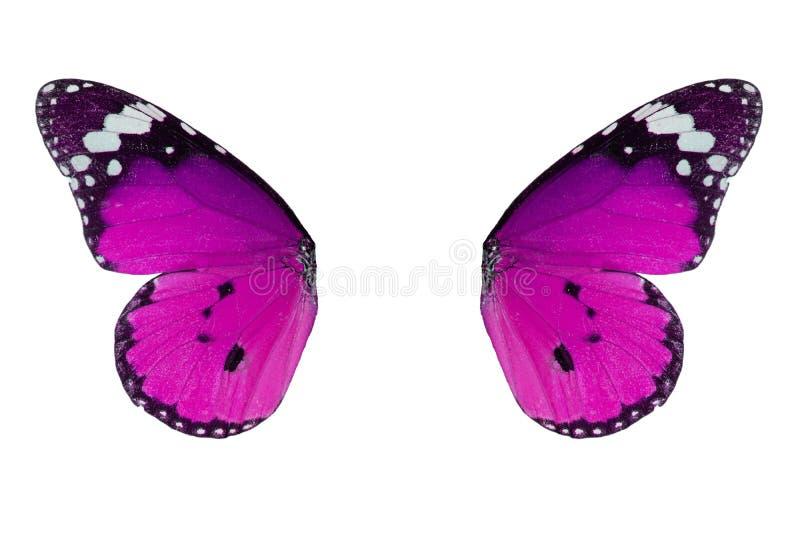 De duidelijke vlinder van de Tijger (chrysippus Danaus) royalty-vrije stock afbeeldingen