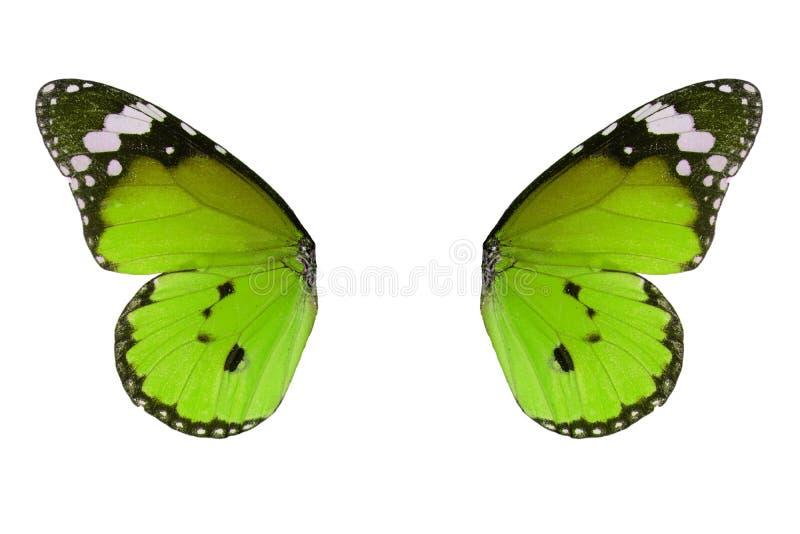 De duidelijke vlinder van de Tijger (chrysippus Danaus) royalty-vrije stock foto