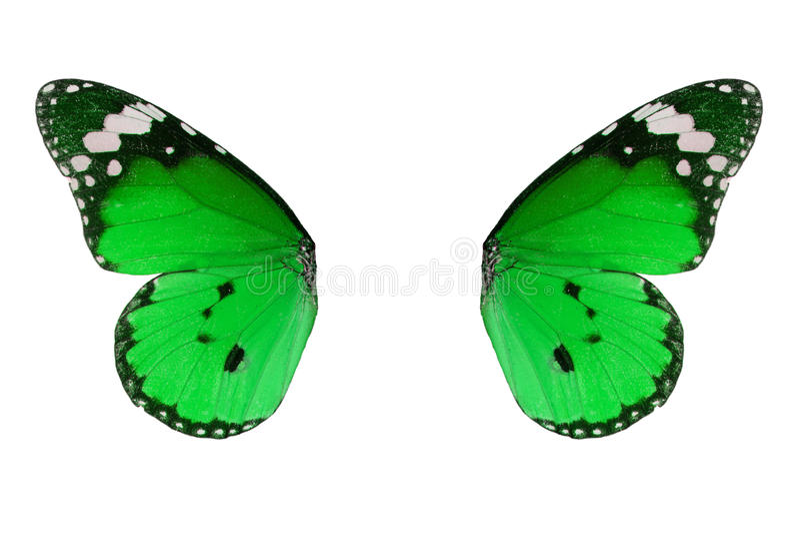 De duidelijke vlinder van de Tijger (chrysippus Danaus) stock foto's
