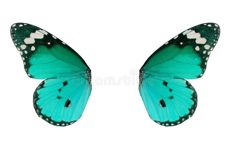 De duidelijke vlinder van de Tijger (chrysippus Danaus) stock afbeelding