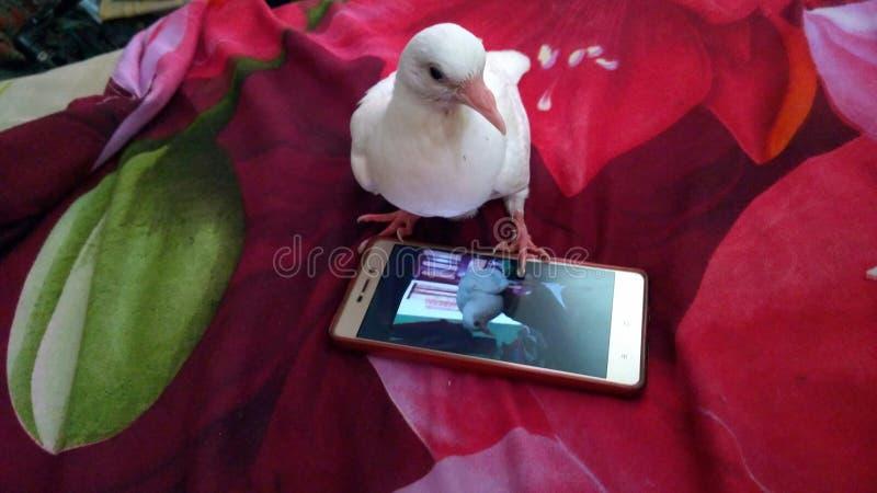 De duif met mobiele grappige beelden in mijn gurden grappige ogenblikken royalty-vrije stock afbeeldingen