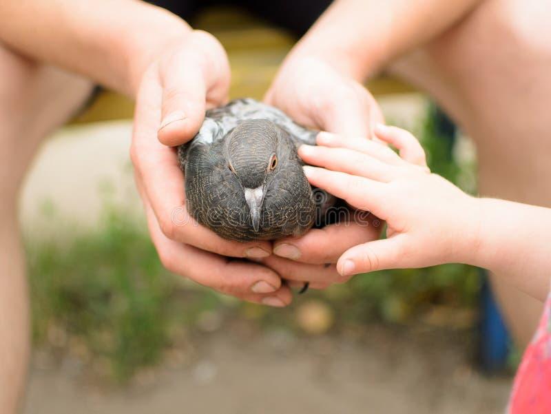 De duif van kindaanrakingen stock fotografie