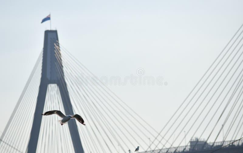 De duif vliegt over een uitgerekte brug royalty-vrije stock foto
