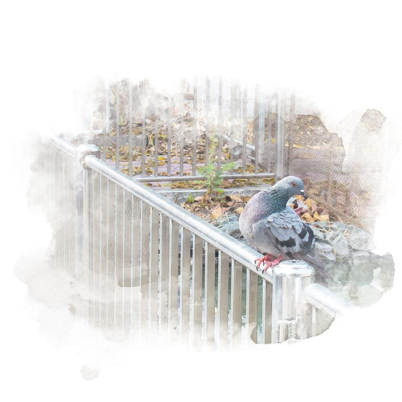 De duif zit op spoor royalty-vrije illustratie