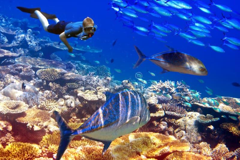 De duiker over koralen en tropische vissen. Onderwaterlandschap in een zonnige dag royalty-vrije stock afbeelding