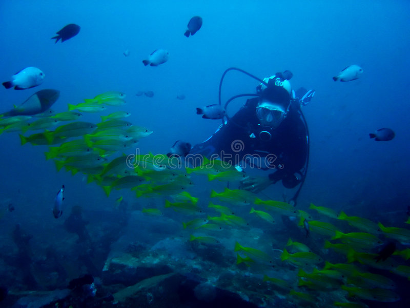 De duiker van het aquarium royalty-vrije stock afbeelding