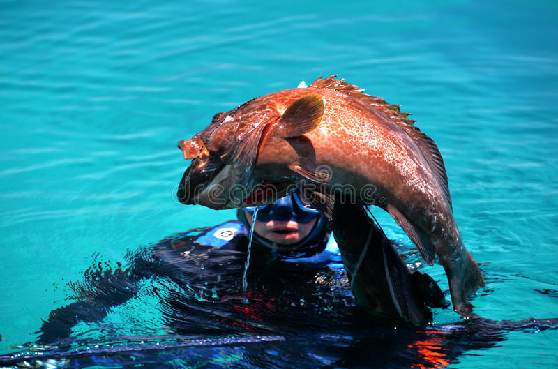 De duiker ving zwarte tandbaarsvissen royalty-vrije stock foto's