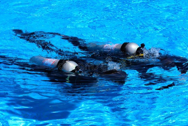 De duikers dalen in de pool De leraar onderwijst de leerling de regels en de les van het duiken stock foto's