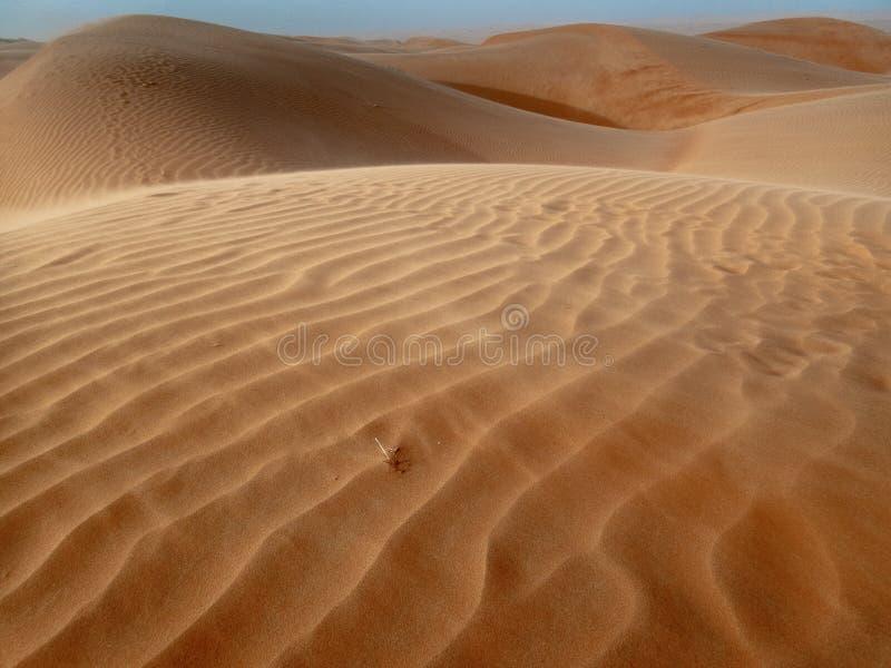 De duinen van het Wahiba-Zand verlaten in Oman tijdens typische su stock afbeelding