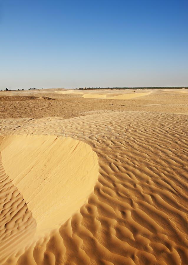 De Duinen Van Het Zand In De Sahara Royalty-vrije Stock Foto's