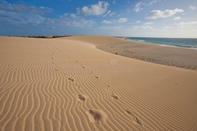 De duinen van het zand dichtbij de oceaan royalty-vrije stock afbeeldingen