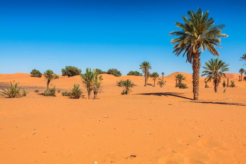 De Duinen van het zand van Erg Chebbi int stock foto's