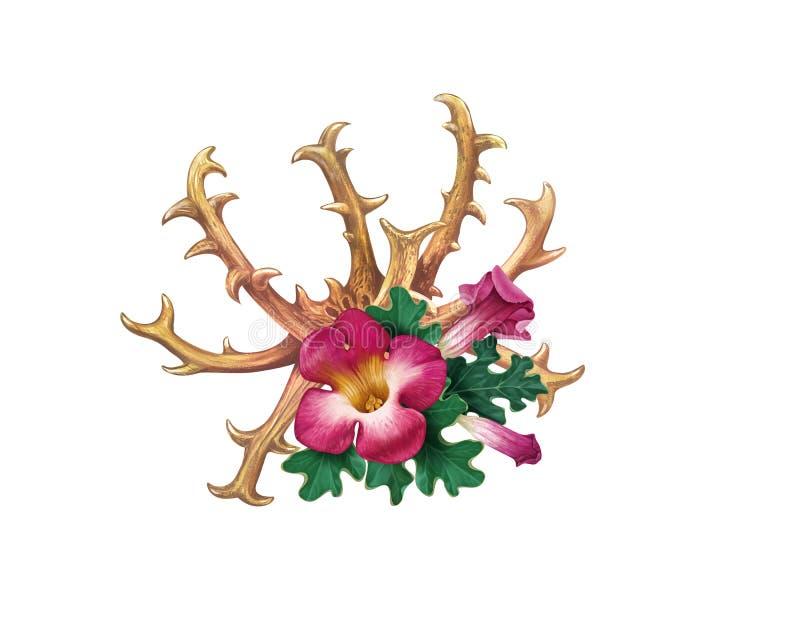 De duivels` s Klauw Harpagophytum procumbens, of grijpt installatie, hout vast royalty-vrije illustratie