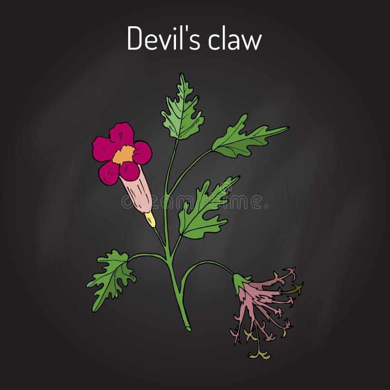 De duivelss Klauw Harpagophytum procumbens, of grijpt installatie, houten spin vast vector illustratie