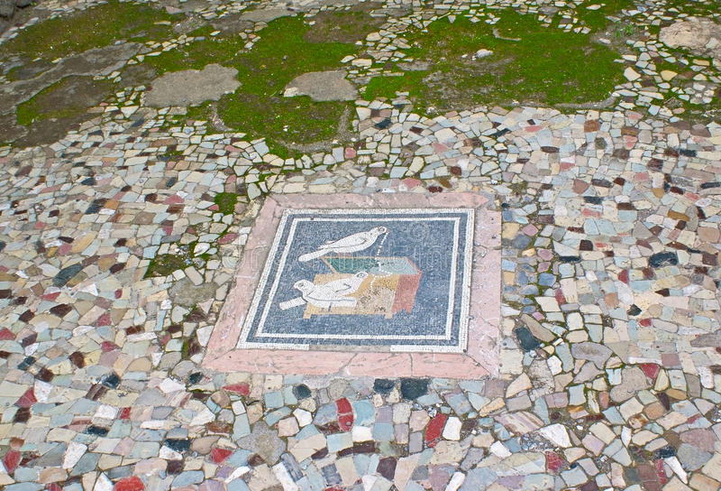 De duiven binnenshuis van Faun royalty-vrije stock afbeelding
