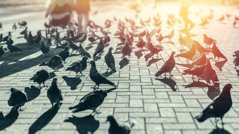 De duiven op de stad regelen tussen de mensen van toeristen, het stadsleven Het Concept van de recreatievakantie royalty-vrije stock afbeelding