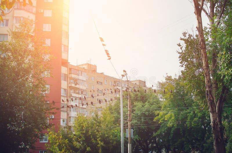 De duiven zitten op draden in de stad Het landschap van de stad stock afbeeldingen