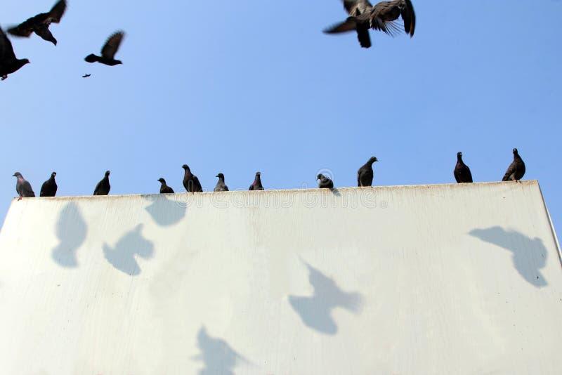 De duiven zitten op een openlucht witte raad royalty-vrije stock fotografie