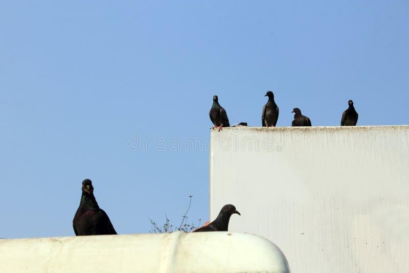 De duiven zitten op een openlucht witte raad royalty-vrije stock foto's
