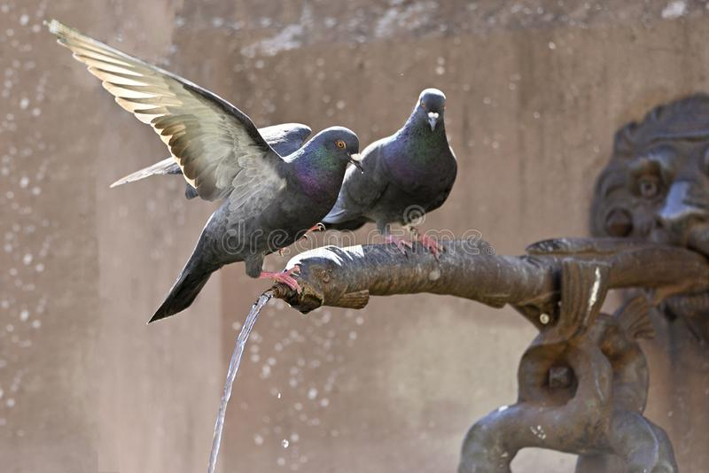 De duiven zitten op de waterautomaat van een fontein royalty-vrije stock foto