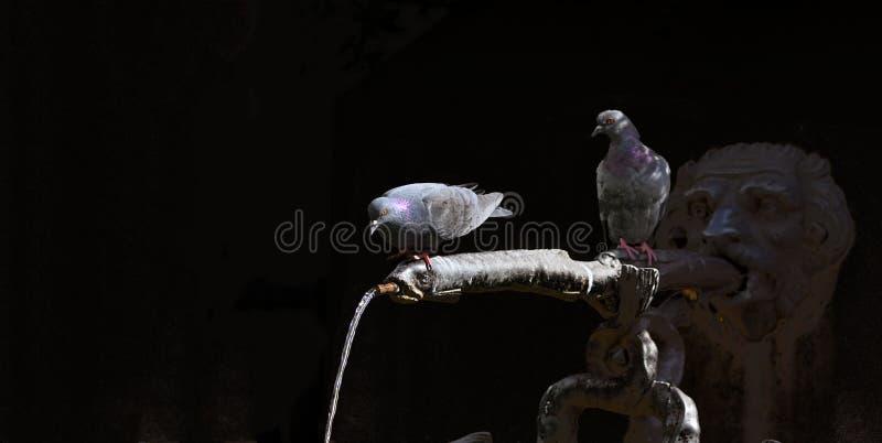De duiven zitten op de waterautomaat van een fontein stock foto