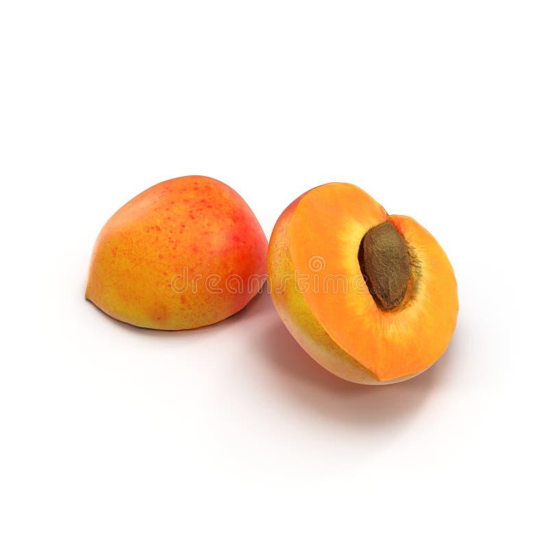 De dwarsdoorsnede van de rijpe abrikoos met zaad op witte 3D Illustratie royalty-vrije stock fotografie