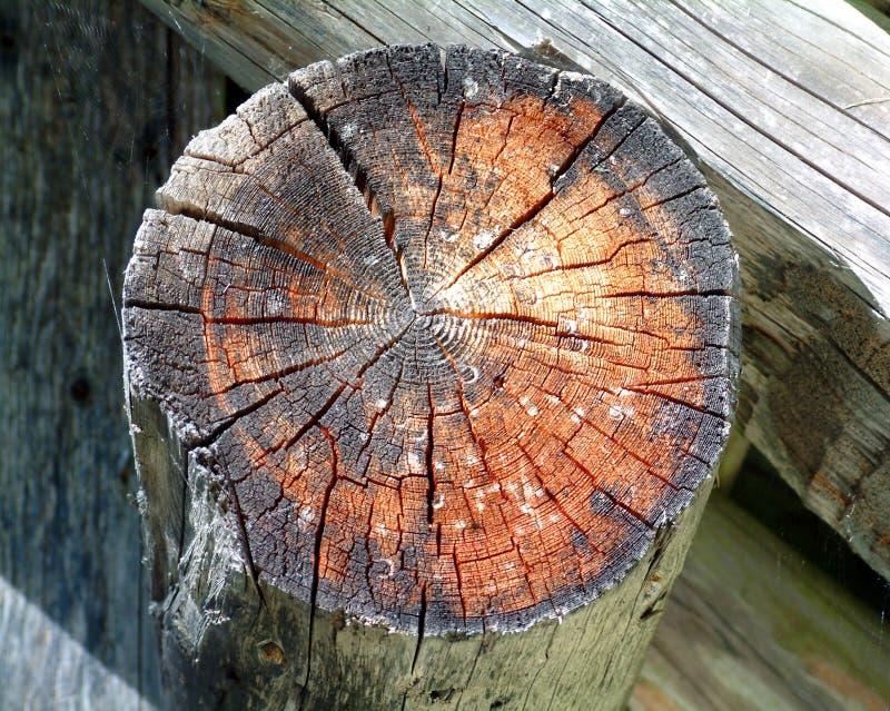 Download De Dwarsdoorsnede Van Het Logboek Stock Afbeelding - Afbeelding bestaande uit maatregel, sectie: 27201