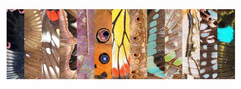 De echte inzameling van het het patroondetail van de vlindervleugel stock foto's