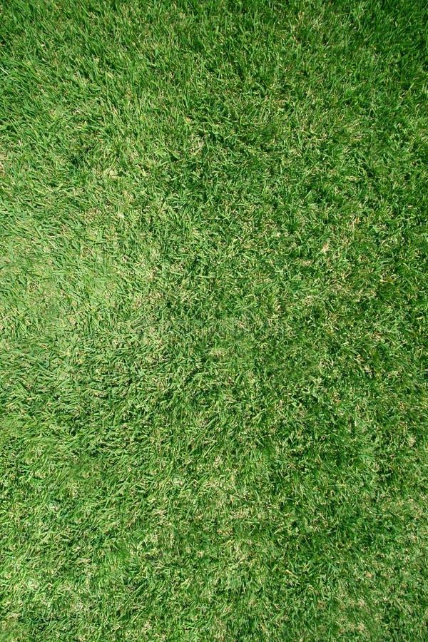 De echte textuur van het grasgazon