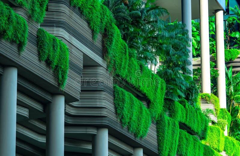 De Eco vriendschappelijke bouw met verticale tuin in moderne stad Groene installatie en boombos en klimop op voorgevel bij de duu stock foto's
