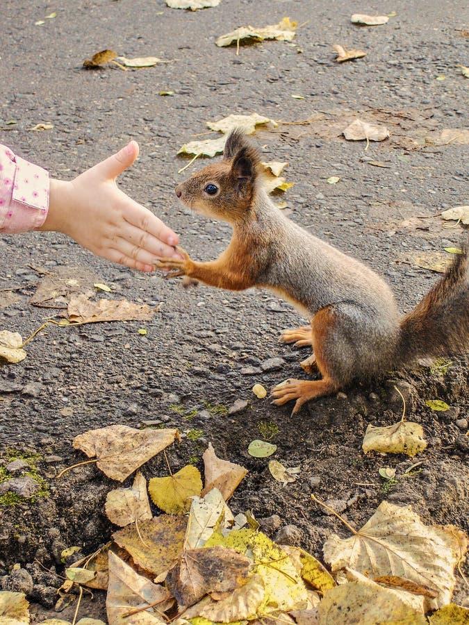 De eekhoorn houdt de poten van de hand van een kind royalty-vrije stock afbeelding