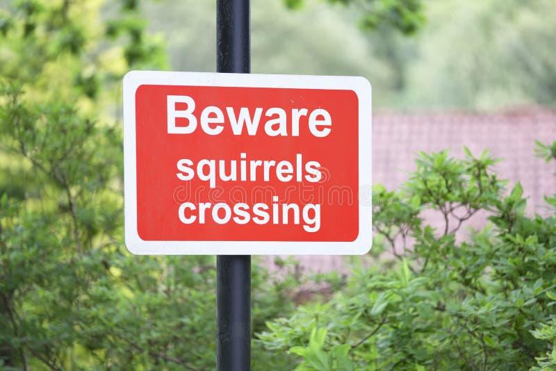 De eekhoorns voorzichtig zijn de kruising van verkeersteken royalty-vrije stock fotografie