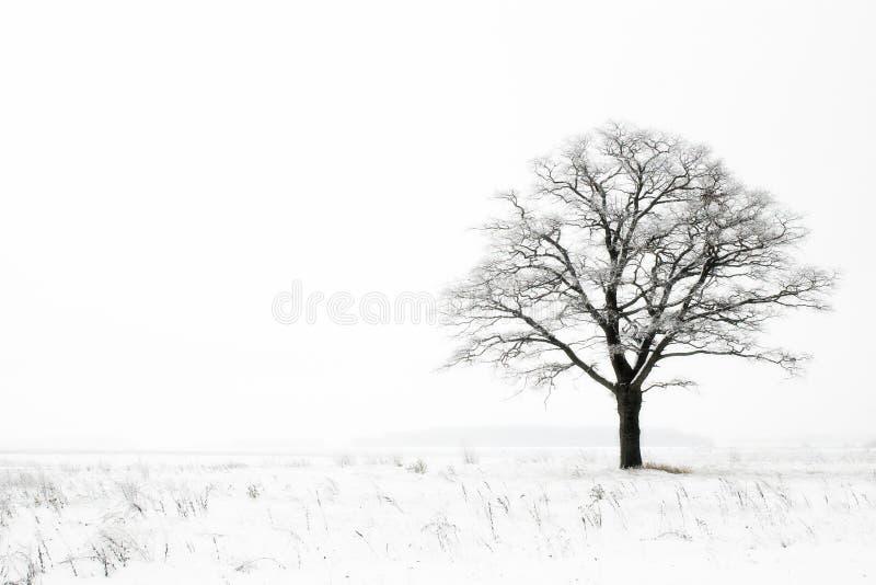 De eenzaamheid van de winter royalty-vrije stock fotografie