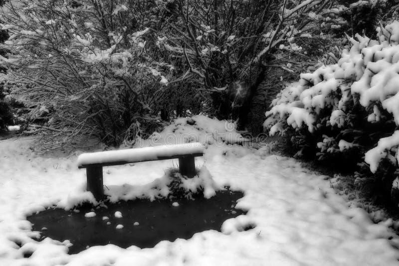 De eenzame bank wintergarden binnen royalty-vrije stock fotografie