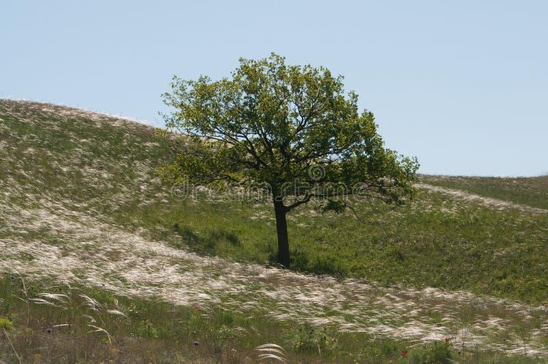 De eenzame boom royalty-vrije stock afbeeldingen