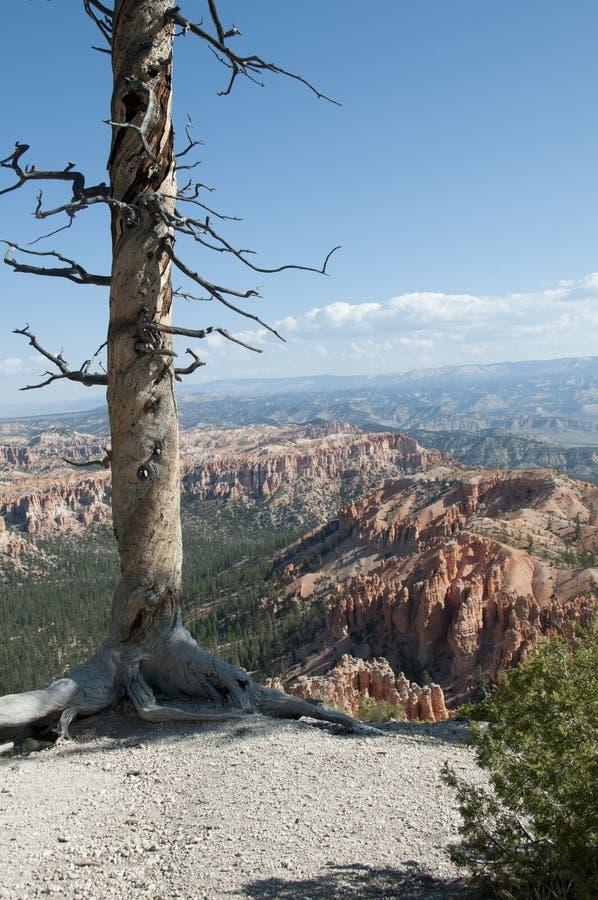 De Eenzame Boom in Bryce Canyon Hoodoos Desert Landscape stock foto