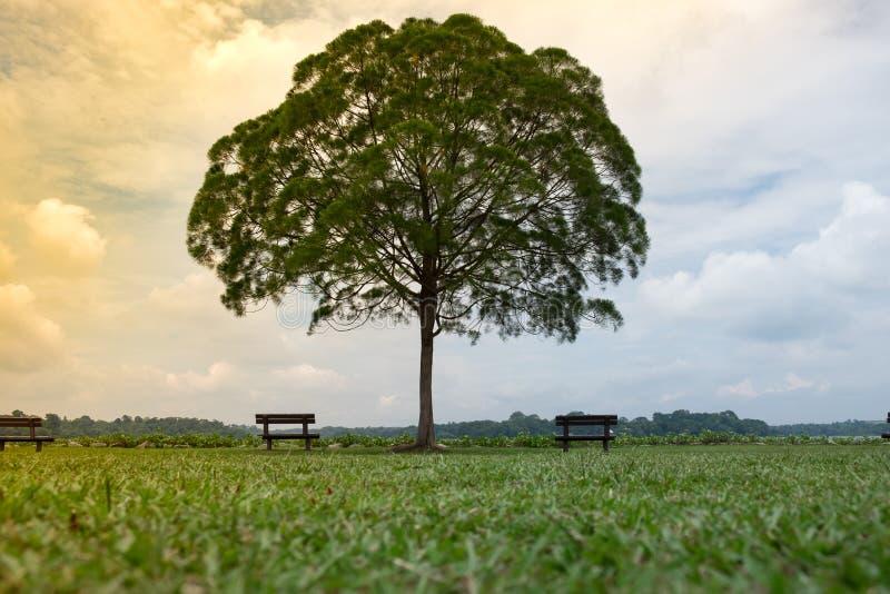De eenzame boom in groene weide heeft bank beide kanten hen blauwe hemel royalty-vrije stock fotografie