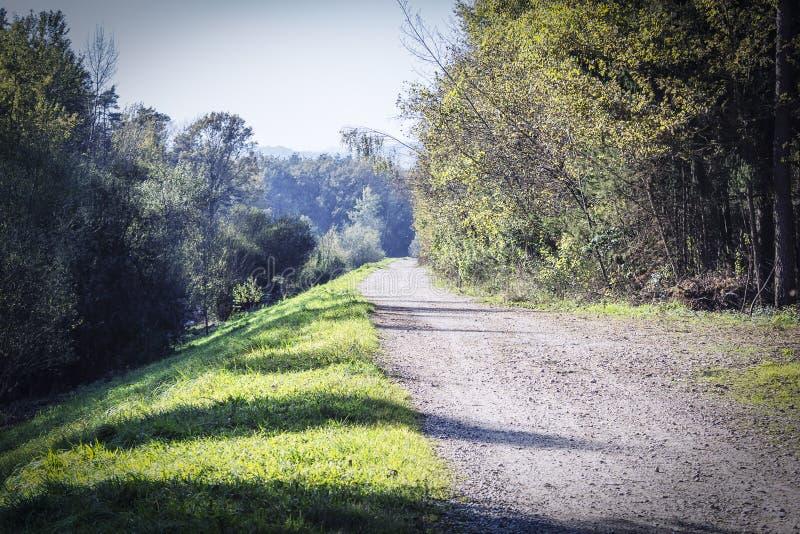 De Eenzame Bosweg royalty-vrije stock afbeeldingen