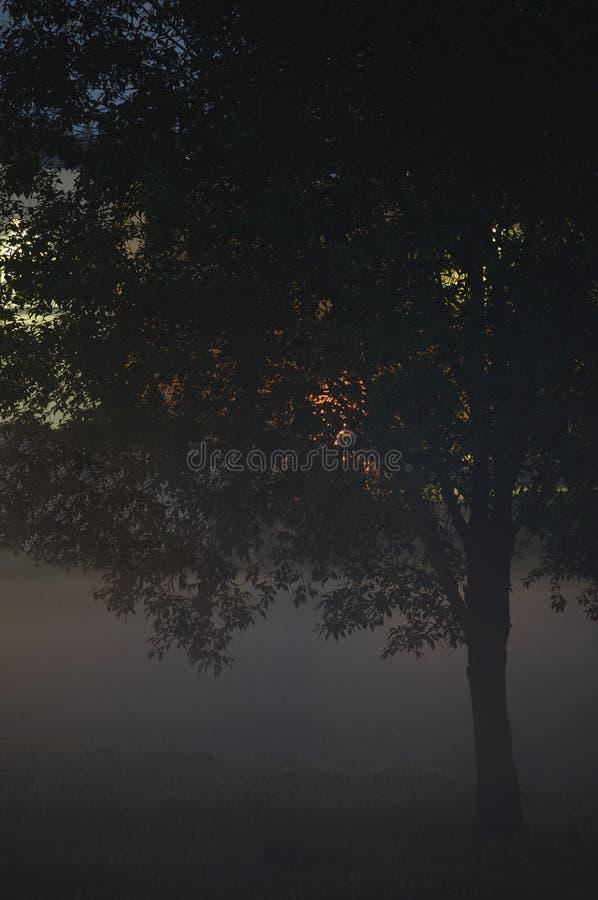 De eenzame Enige Boom vertakt zich Close-up, Mistige Schemeringmist, Misty Silhouette In Low Fog-Schemer, Verticaal Helder Lit Al stock afbeelding