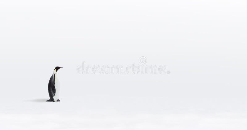 De eenzame pinguïn van de Keizer stock foto's