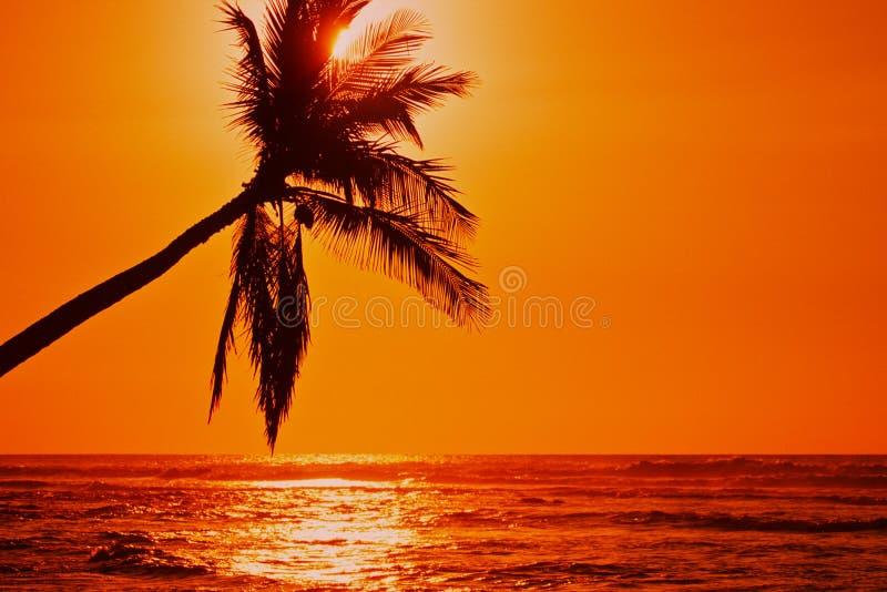 De eenzame Zonsondergang van de Palm royalty-vrije stock foto's