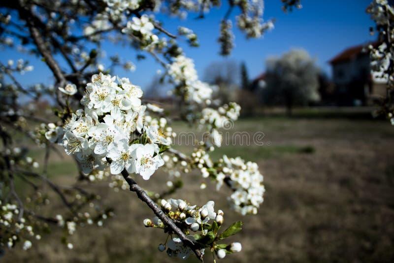 De eerste lente stock afbeeldingen
