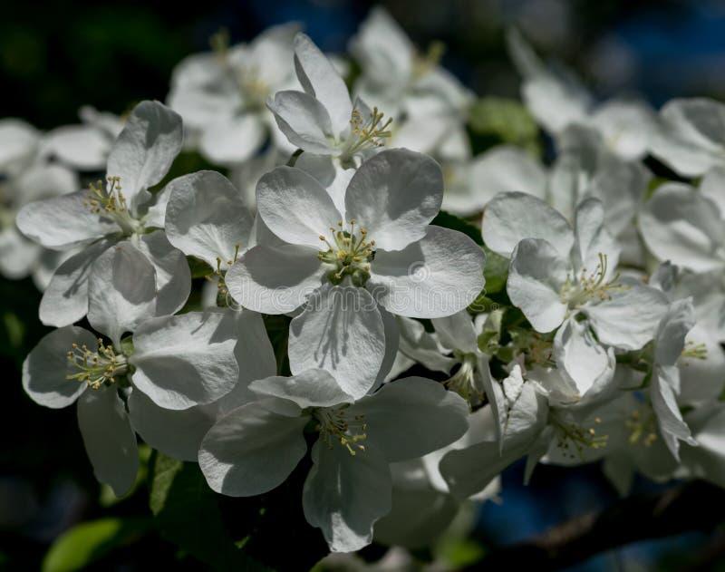 De eerste de lentebloemen royalty-vrije stock foto