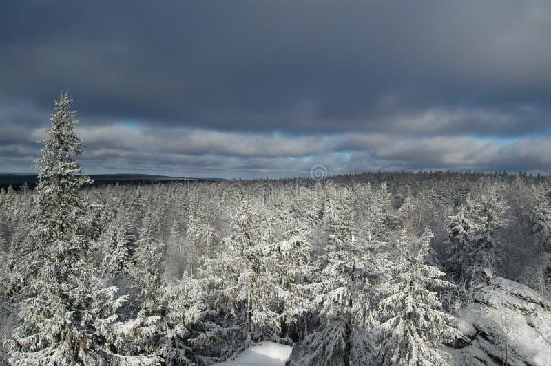 De eerste sneeuw stock fotografie
