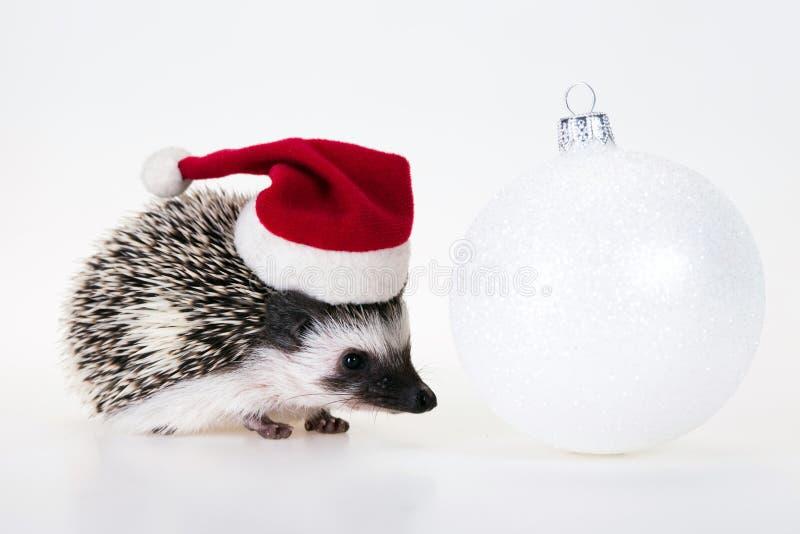 De egel van Kerstmis stock foto