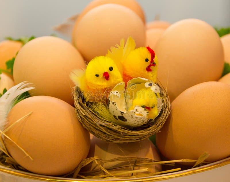 De eieren en de kuikens van de kip royalty-vrije stock afbeelding