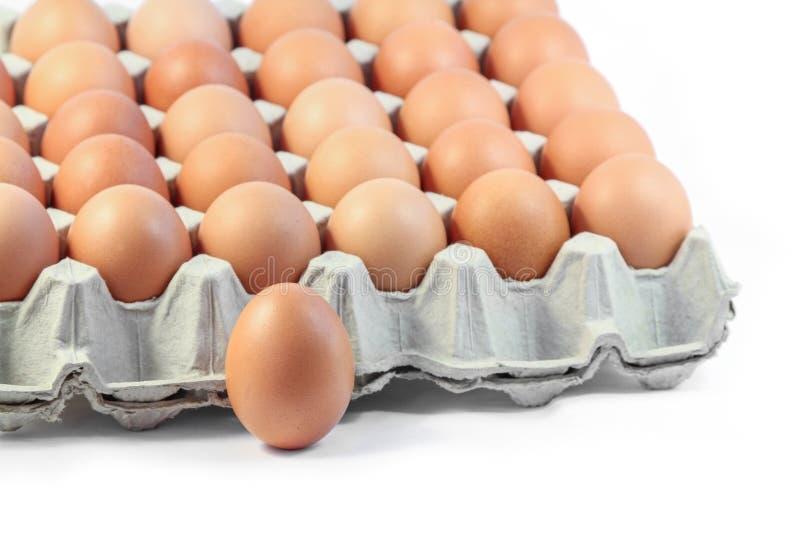 De eieren van de kip op witte achtergrond stock afbeelding