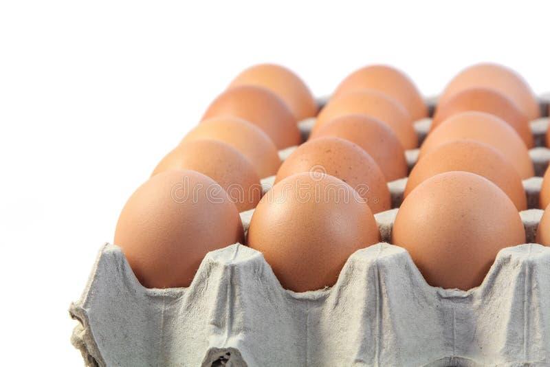 De eieren van de kip op witte achtergrond stock foto's