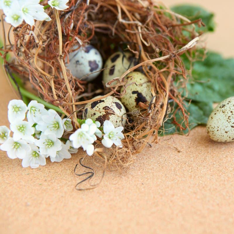 De eieren van de vogel in nest. stock foto