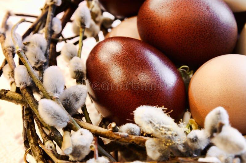 De eieren van het gevogelte in een vogel-nest stock foto's